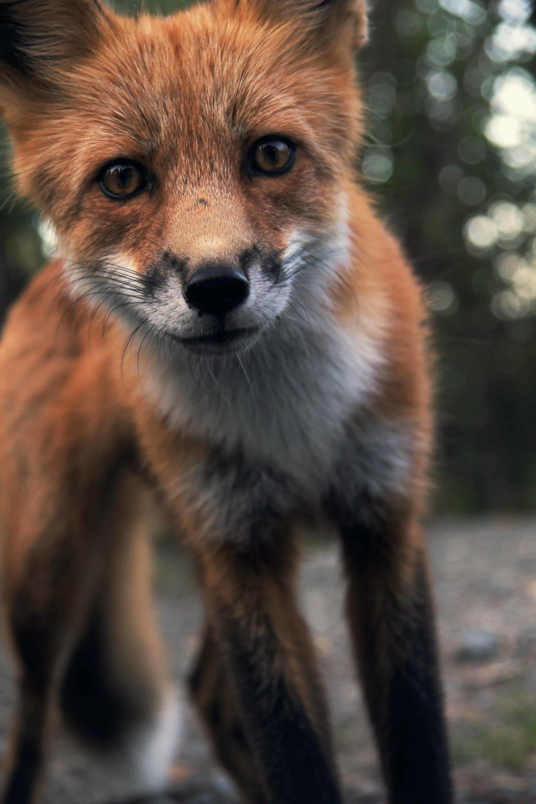 leadgeneratie slim als een vos zijn